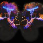 Brain Electricity1024
